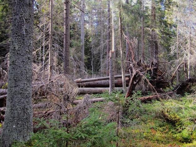 Kuva: Niina Uusi-Seppä/ Luonnonperintösäätiö